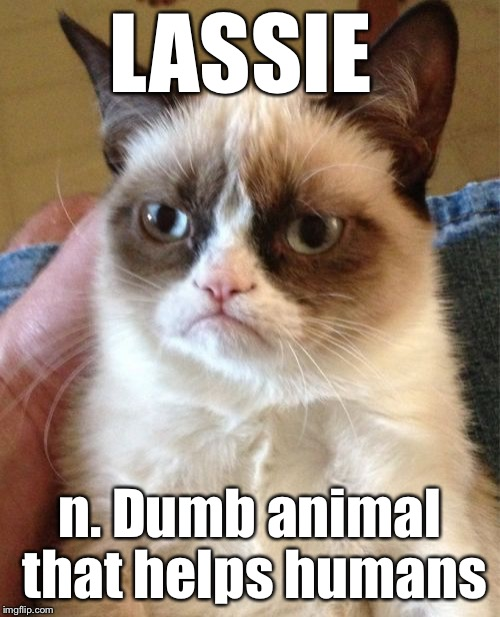 Grumpy Cat Meme | LASSIE n. Dumb animal that helps humans | image tagged in memes,grumpy cat | made w/ Imgflip meme maker