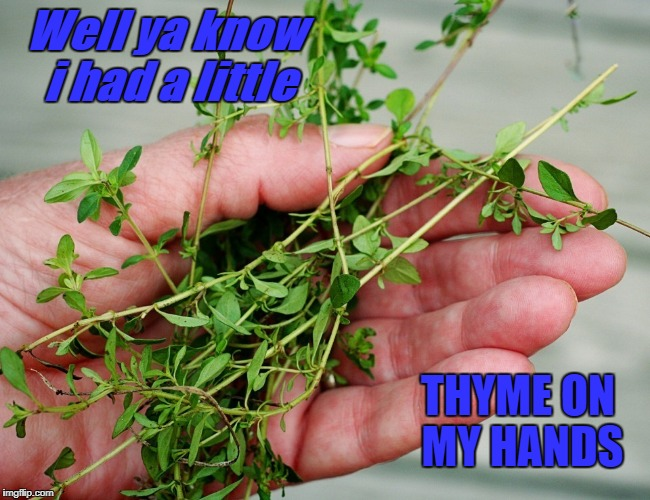 i had a little thyme on my hands | Well ya know i had a little THYME ON MY HANDS | image tagged in funny | made w/ Imgflip meme maker