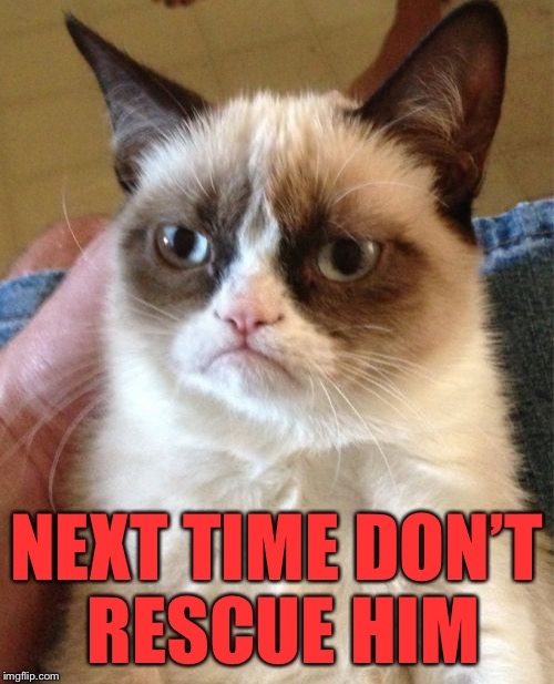 Grumpy Cat Meme | NEXT TIME DON'T RESCUE HIM | image tagged in memes,grumpy cat | made w/ Imgflip meme maker