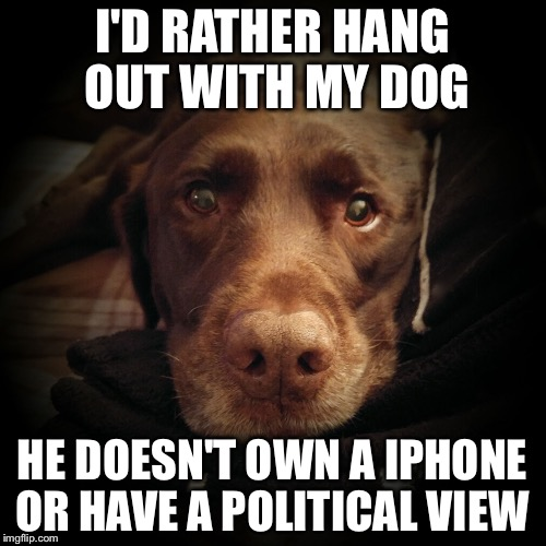 I'D RATHER HANG OUT WITH MY DOG HE DOESN'T OWN A IPHONE OR HAVE A POLITICAL VIEW | image tagged in chuckie the chocolate lab | made w/ Imgflip meme maker