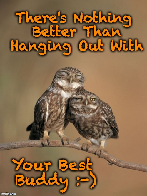 Best Buddies | There's Nothing Better Than Hanging Out With Your Best Buddy :-) | image tagged in burrowing owl buddies | made w/ Imgflip meme maker