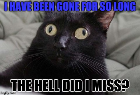 Seriously... What'd I miss? | I HAVE BEEN GONE FOR SO LONG THE HELL DID I MISS? | image tagged in confused cat,gone for so long | made w/ Imgflip meme maker