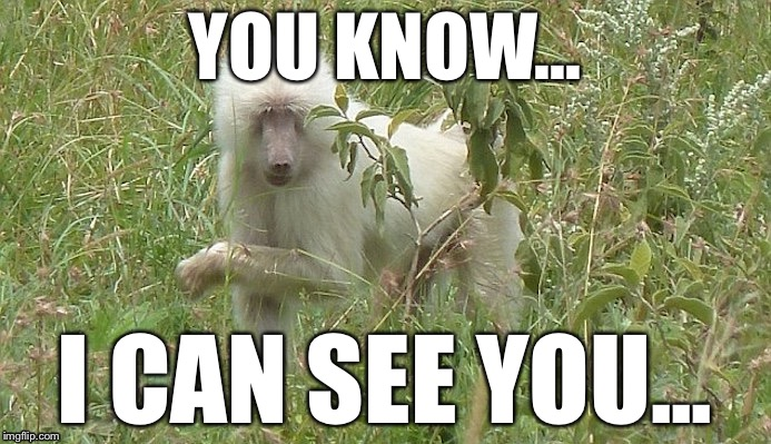 It sees you | YOU KNOW... I CAN SEE YOU... | image tagged in baboon,i see you | made w/ Imgflip meme maker