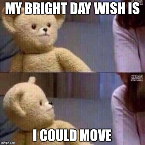 What? Teddy Bear | MY BRIGHT DAY WISH IS I COULD MOVE | image tagged in what teddy bear | made w/ Imgflip meme maker