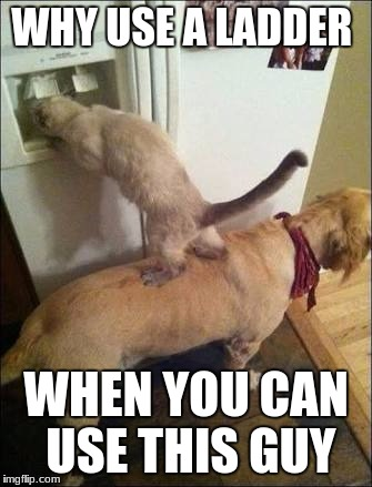 Smart animals | WHY USE A LADDER WHEN YOU CAN USE THIS GUY | image tagged in smart animals | made w/ Imgflip meme maker