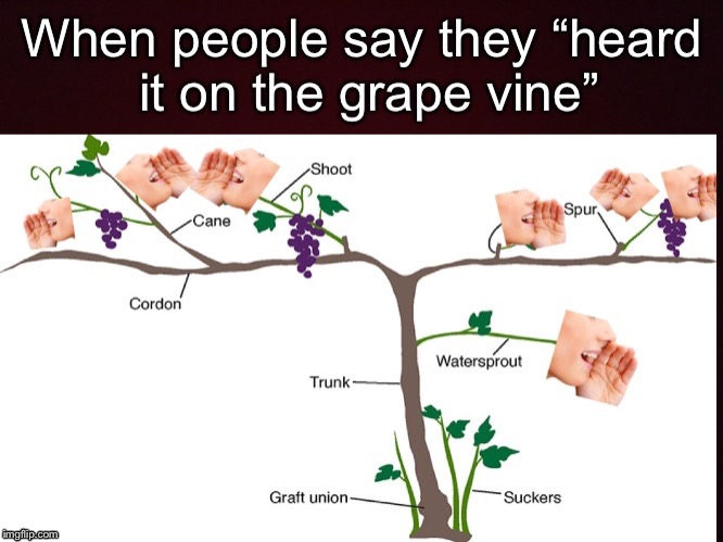 Heard it on the grape vine | image tagged in memes | made w/ Imgflip meme maker