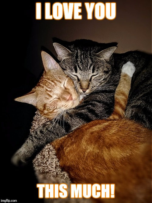 cute cats Memes & GIFs - Imgflip