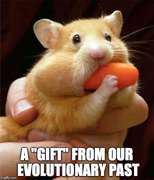 "Hungry Hungry Hamster | A ""GIFT"" FROM OUR EVOLUTIONARY PAST 