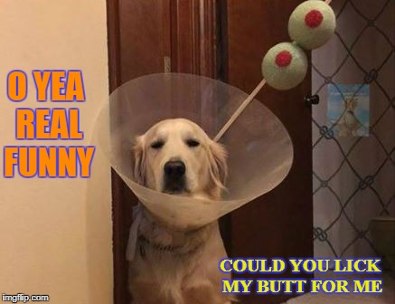 oh yea real funny | O YEA REAL FUNNY COULD YOU LICK MY BUTT FOR ME | image tagged in dogs | made w/ Imgflip meme maker