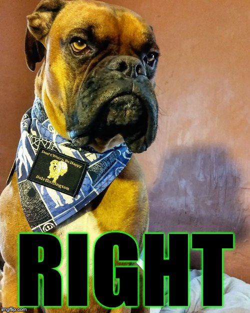 Grumpy Dog | RIGHT | image tagged in grumpy dog | made w/ Imgflip meme maker