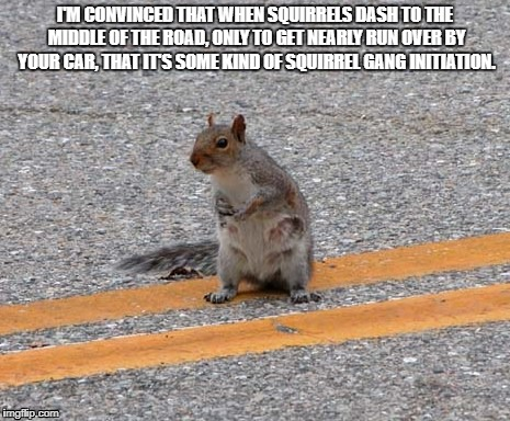 Funny Squirrel Meme | I'M CONVINCED THAT WHEN SQUIRRELS DASH TO THE MIDDLE OF THE ROAD, ONLY TO GET NEARLY RUN OVER BY YOUR CAR, THAT IT'S SOME KIND OF SQUIRREL G | image tagged in squirrel,road,funny | made w/ Imgflip meme maker