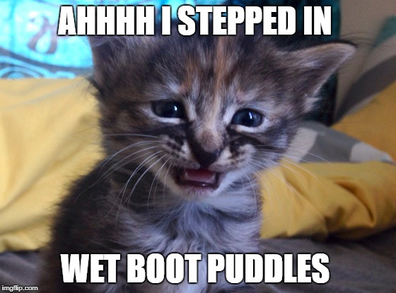 Sad Kitty | AHHHH I STEPPED IN WET BOOT PUDDLES | image tagged in sad kitty | made w/ Imgflip meme maker