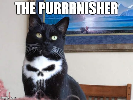 The Punisher | THE PURRRNISHER | image tagged in punisher,cat,funny | made w/ Imgflip meme maker