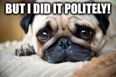 BUT I DID IT POLITELY! | image tagged in pleading pug | made w/ Imgflip meme maker