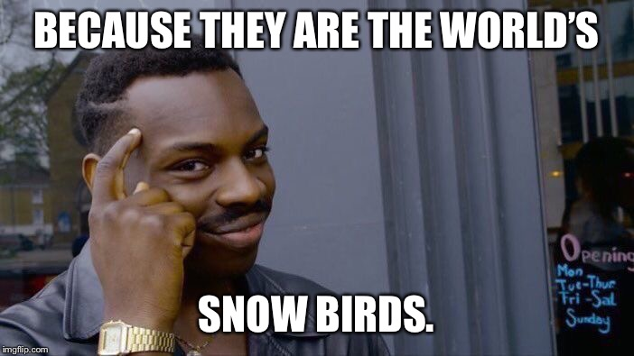 Roll Safe Think About It Meme | BECAUSE THEY ARE THE WORLD'S SNOW BIRDS. | image tagged in memes,roll safe think about it | made w/ Imgflip meme maker
