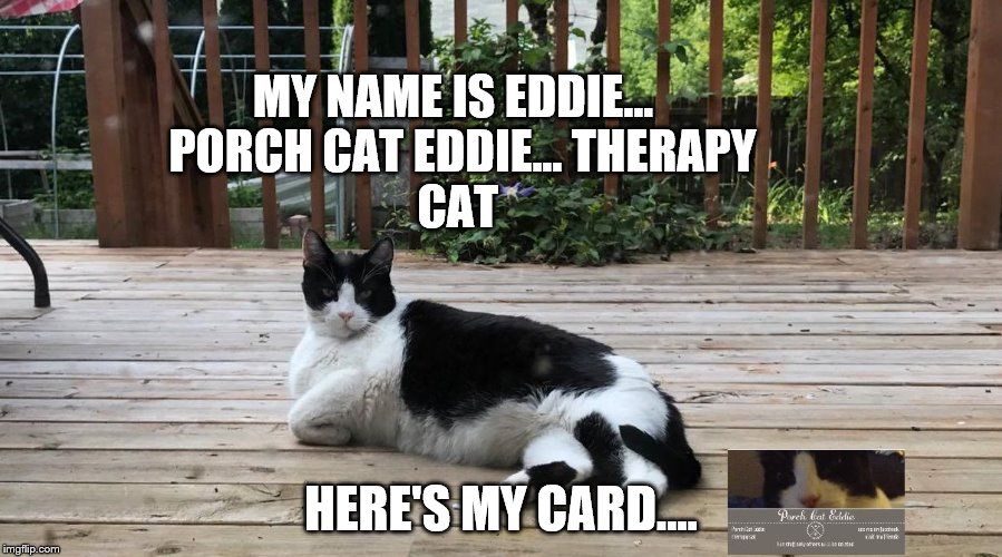 Therapy cat | MY NAME IS EDDIE...  PORCH CAT EDDIE... THERAPY CAT HERE'S MY CARD.... | image tagged in porch cat eddie,cat meme,funny cats,my name is | made w/ Imgflip meme maker