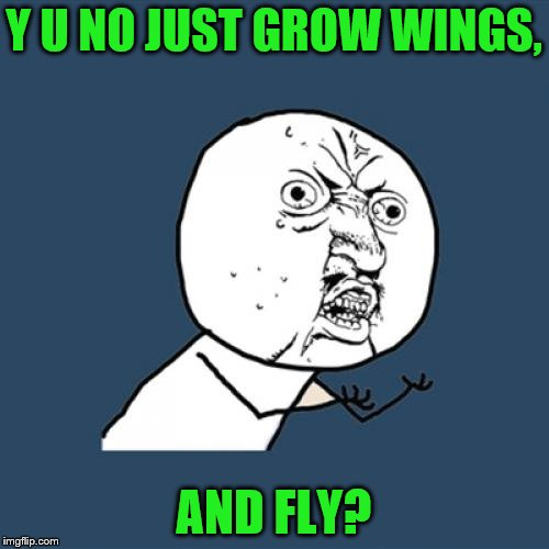 Y U No Meme | Y U NO JUST GROW WINGS, AND FLY? | image tagged in memes,y u no | made w/ Imgflip meme maker