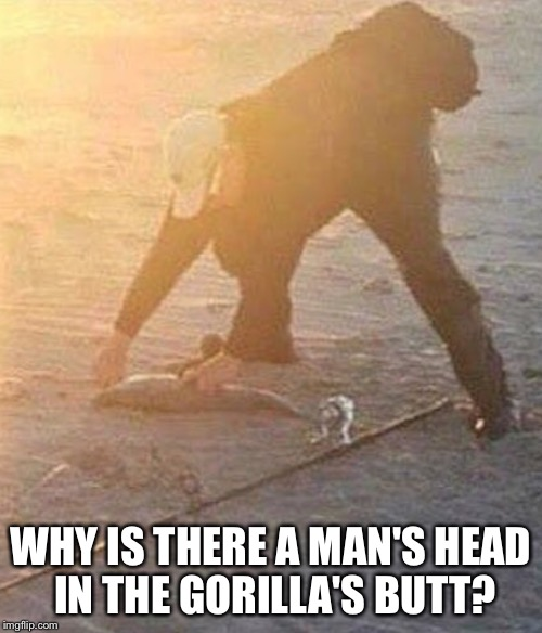 WHY IS THERE A MAN'S HEAD IN THE GORILLA'S BUTT? | image tagged in memes,gorilla | made w/ Imgflip meme maker