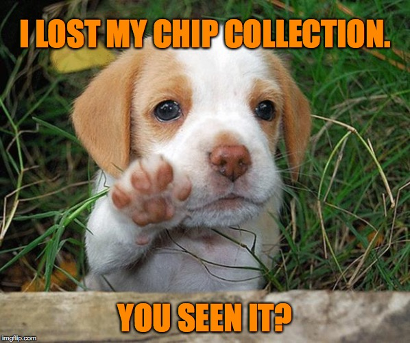 I LOST MY CHIP COLLECTION. YOU SEEN IT? | made w/ Imgflip meme maker