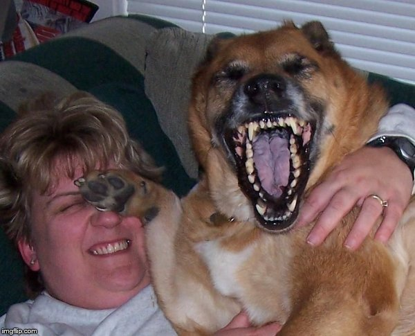 laughing dog | M | image tagged in laughing dog | made w/ Imgflip meme maker