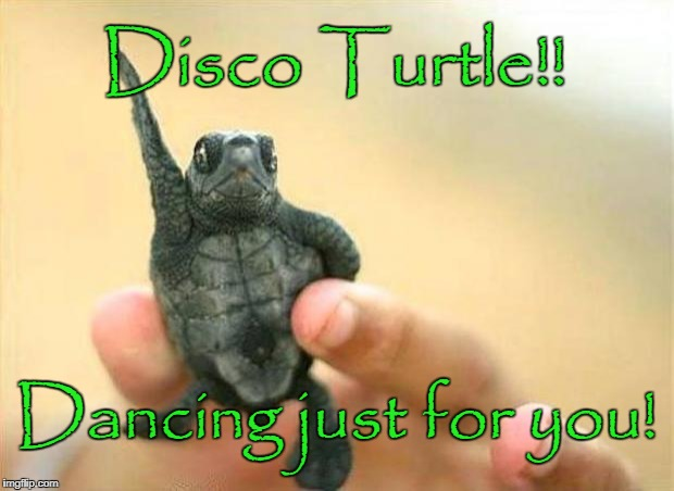 disco turtle | Disco Turtle!! Dancing just for you! | image tagged in disco turtle | made w/ Imgflip meme maker