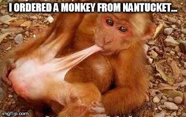 I ORDERED A MONKEY FROM NANTUCKET… | image tagged in monkey sex | made w/ Imgflip meme maker