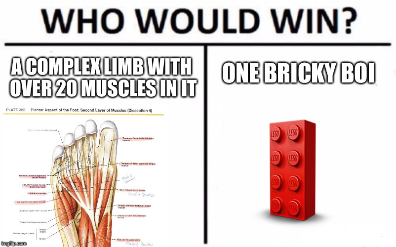 Who Would Win? Meme | A COMPLEX LIMB WITH OVER 20 MUSCLES IN IT ONE BRICKY BOI | image tagged in memes,who would win | made w/ Imgflip meme maker