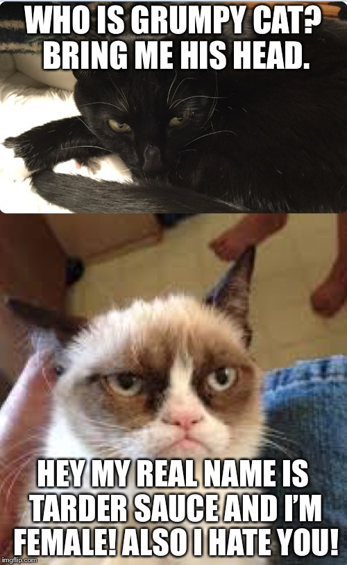 Grumpy cat meets a another one. | WHO IS GRUMPY CAT? BRING ME HIS HEAD. HEY MY REAL NAME IS TARDER SAUCE AND I'M FEMALE! ALSO I HATE YOU! | image tagged in the grumpy cat with one grumpier cat | made w/ Imgflip meme maker