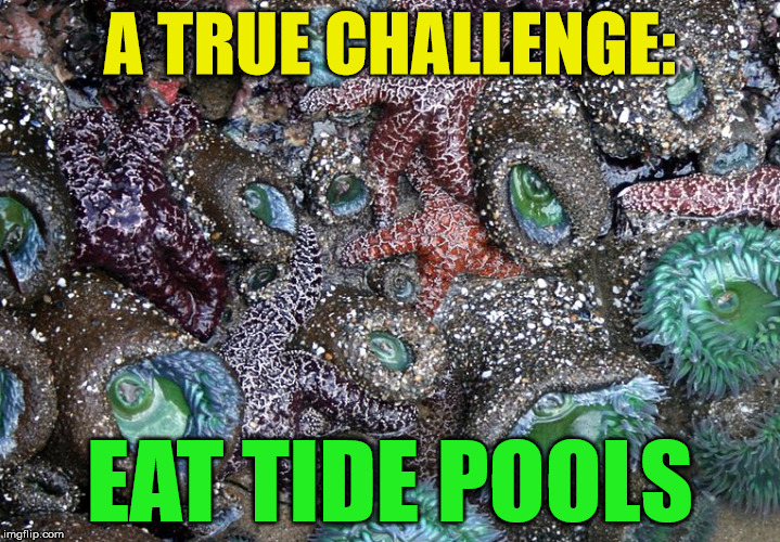 There's Always Something New to Ingest | A TRUE CHALLENGE: EAT TIDE POOLS | image tagged in tide pods,tide pod challenge,tide pool,challenge | made w/ Imgflip meme maker