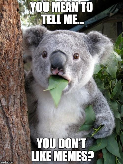 Surprised Koala Meme | YOU MEAN TO TELL ME... YOU DON'T LIKE MEMES? | image tagged in memes,surprised koala | made w/ Imgflip meme maker