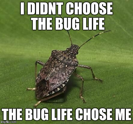 Stink bug | I DIDNT CHOOSE THE BUG LIFE THE BUG LIFE CHOSE ME | image tagged in stink bug | made w/ Imgflip meme maker