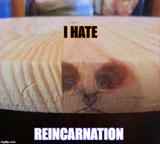 i hate reincarnation | I HATE REINCARNATION | image tagged in reincarnation | made w/ Imgflip meme maker