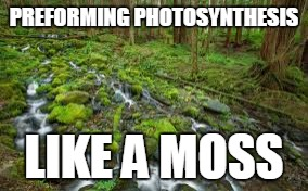Photosythesis | PREFORMING PHOTOSYNTHESIS LIKE A MOSS | image tagged in moss | made w/ Imgflip meme maker