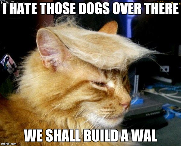 donald trump cat |  I HATE THOSE DOGS OVER THERE; WE SHALL BUILD A WAL | image tagged in donald trump cat | made w/ Imgflip meme maker