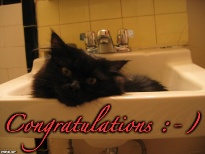 sink kitty 2 | Congratulations :-) | image tagged in sink kitty 2 | made w/ Imgflip meme maker