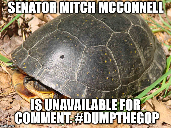 SENATOR MITCH MCCONNELL IS UNAVAILABLE FOR COMMENT. #DUMPTHEGOP | image tagged in mitch mcconnell,turtle,dump the gop | made w/ Imgflip meme maker