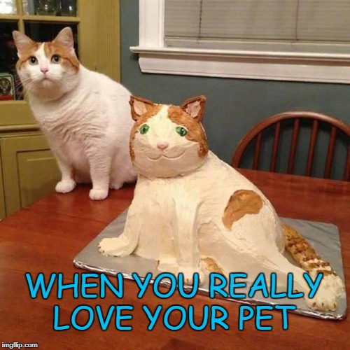 You need a new hobby | WHEN YOU REALLY LOVE YOUR PET | image tagged in cats | made w/ Imgflip meme maker