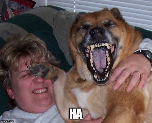 laughing dog | HA | image tagged in laughing dog | made w/ Imgflip meme maker