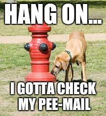 Outlook for dogs | HANG ON... I GOTTA CHECK MY PEE-MAIL | image tagged in dog,pee,email | made w/ Imgflip meme maker