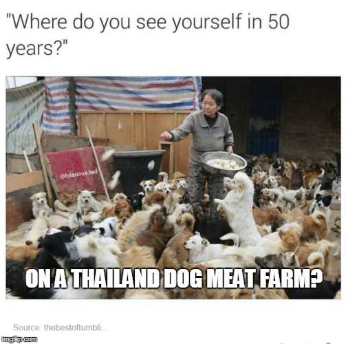Where do you see yourself? | ON A THAILAND DOG MEAT FARM? | image tagged in future,futureself,doggos | made w/ Imgflip meme maker