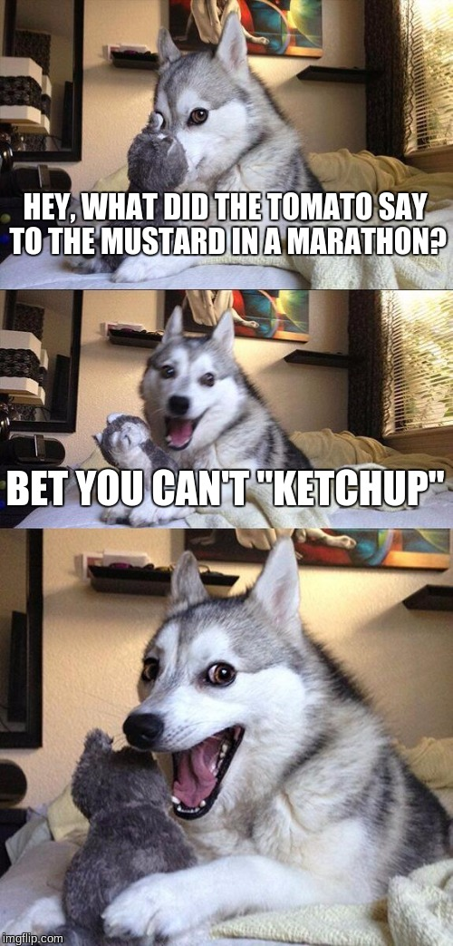 "Bad Pun Dog Meme | HEY, WHAT DID THE TOMATO SAY TO THE MUSTARD IN A MARATHON? BET YOU CAN'T ""KETCHUP"" 