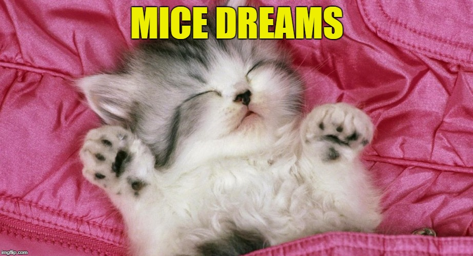 MICE DREAMS | made w/ Imgflip meme maker