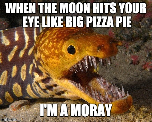 I Got a Million Of 'Em, Ha-Cha-Cha-Cha. | WHEN THE MOON HITS YOUR EYE LIKE BIG PIZZA PIE I'M A MORAY | image tagged in eel,song lyrics,bad joke | made w/ Imgflip meme maker