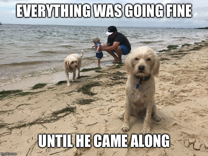 Grumpy Dog |  EVERYTHING WAS GOING FINE; UNTIL HE CAME ALONG | image tagged in jealous,grumpy dog,jealousy | made w/ Imgflip meme maker