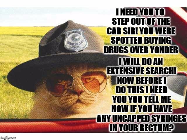 I NEED YOU TO STEP OUT OF THE CAR SIR! YOU WERE SPOTTED BUYING DRUGS OVER YONDER I WILL DO AN EXTENSIVE SEARCH! NOW BEFORE I DO THIS I NEED  | image tagged in sheriff cat | made w/ Imgflip meme maker