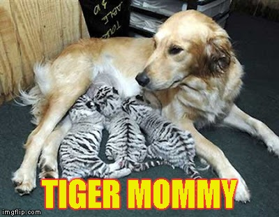 Food | TIGER MOMMY | image tagged in memes,dog,tiger,tiger mommy | made w/ Imgflip meme maker