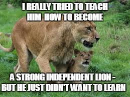 I REALLY TRIED TO TEACH HIM  HOW TO BECOME A STRONG INDEPENDENT LION - BUT HE JUST DIDN'T WANT TO LEARN | made w/ Imgflip meme maker