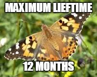 MAXIMUM LIEFTIME 12 MONTHS | made w/ Imgflip meme maker