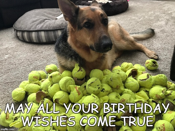 Happy Birthday from the dog.  | MAY ALL YOUR BIRTHDAY WISHES COME TRUE | image tagged in dog,happy birthday | made w/ Imgflip meme maker
