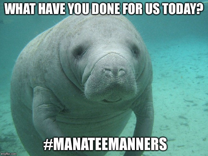 WHAT HAVE YOU DONE FOR US TODAY? #MANATEEMANNERS | image tagged in manatee | made w/ Imgflip meme maker